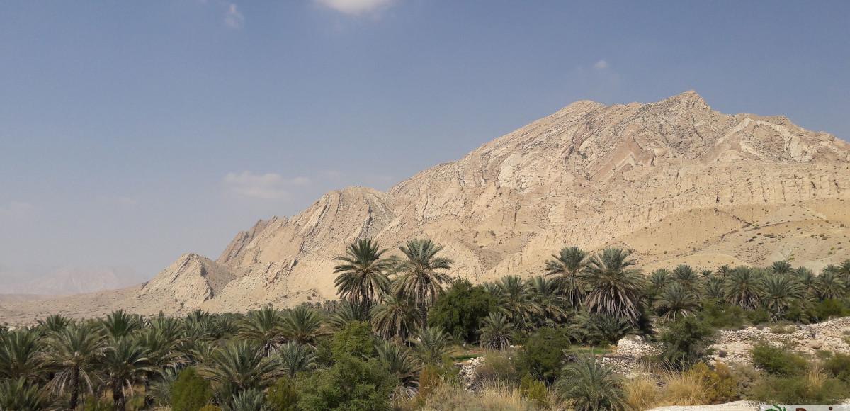 Plantaža Pijarom urme u Haji Abad selu